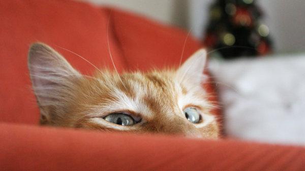 Как избавиться от запаха мочи кота на в домашних условиях