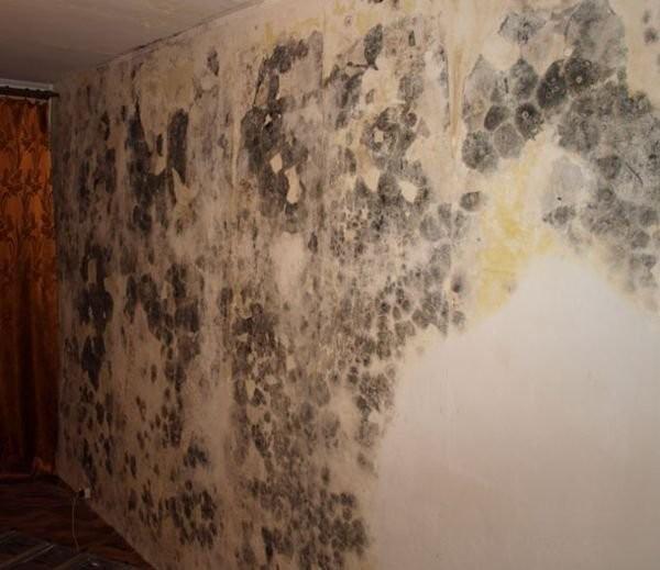 Как убрать плесень со стен не сдирая обои