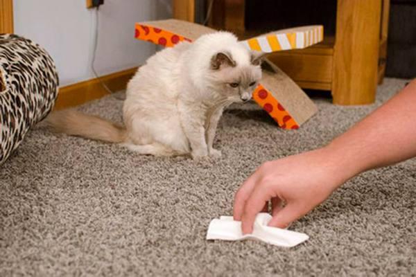Как вывести запах мочи с ковровых покрытий