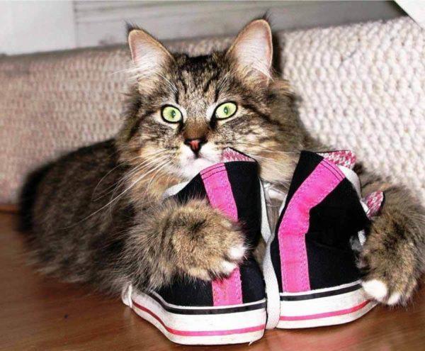 Кот нагадил в ботинок кот нагадил в ботинок