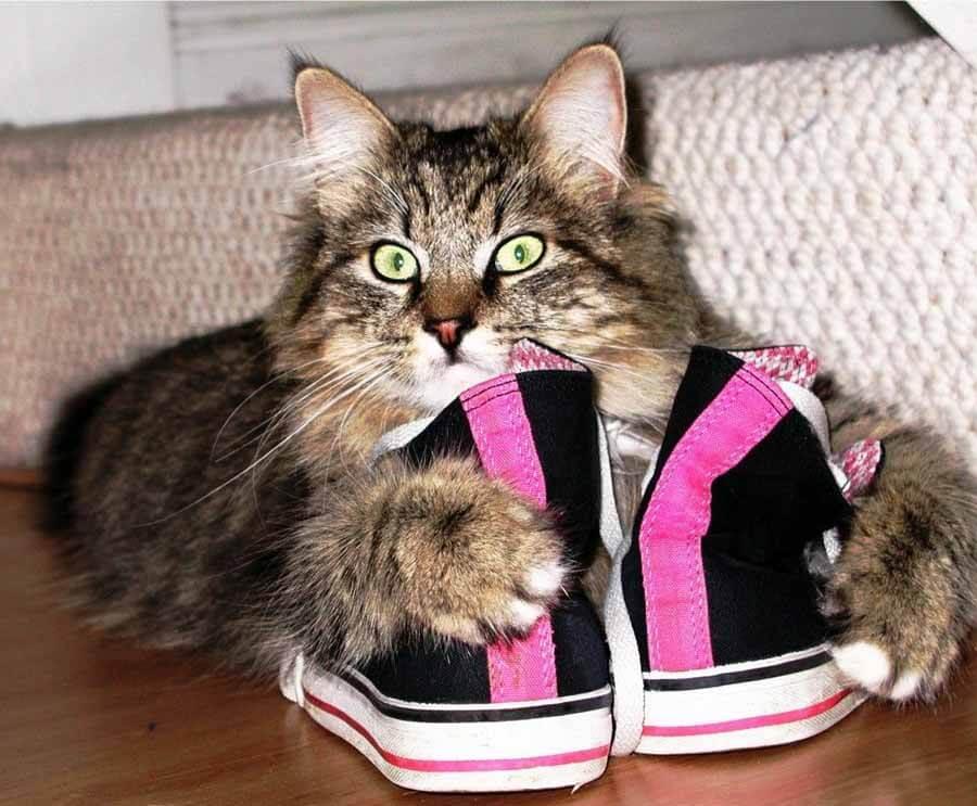 Что делать, если кот нагадил в обувь