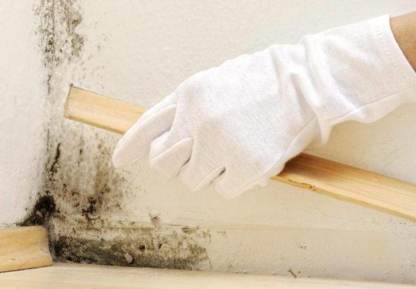 Чем опасна черная плесень в доме и как от нее избавиться