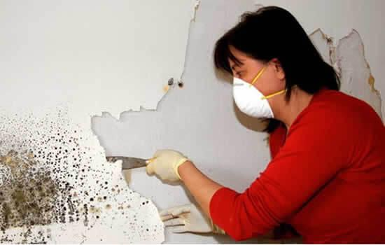 Народные средства от плесени на стенах