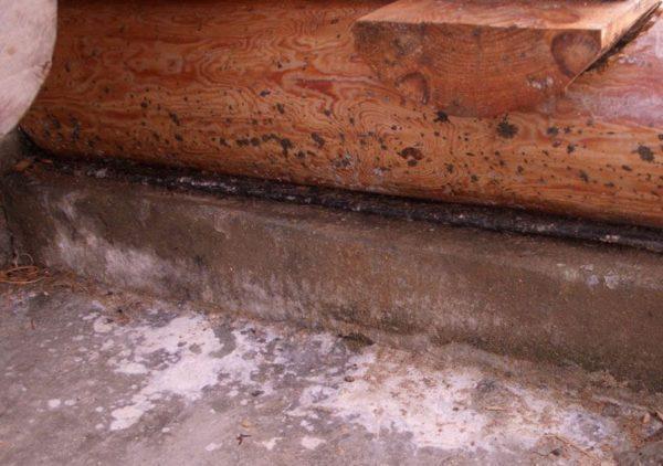 Вытяжка грибок в баню