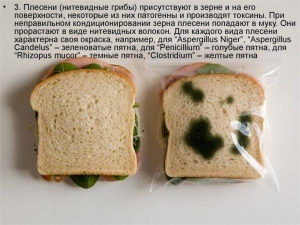 42Съела заплесневелый хлеб что делать