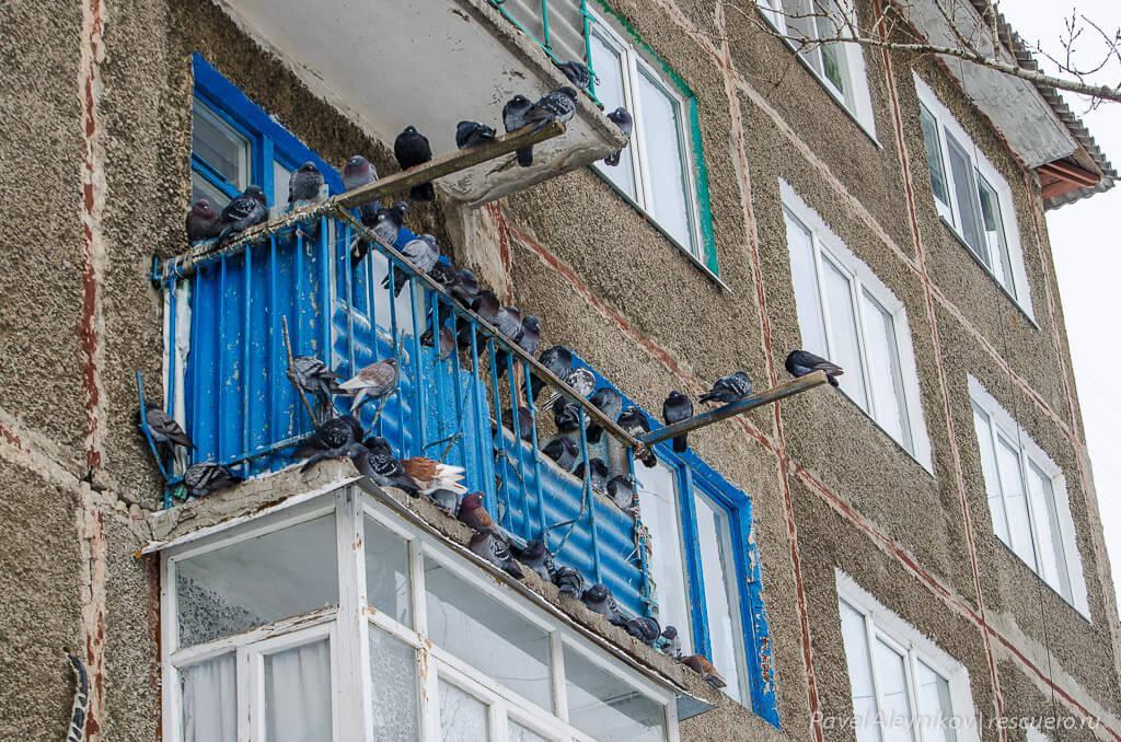 Что поможет отвадить птиц с балкона