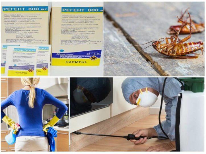 Как использовать Регент 800 от тараканов