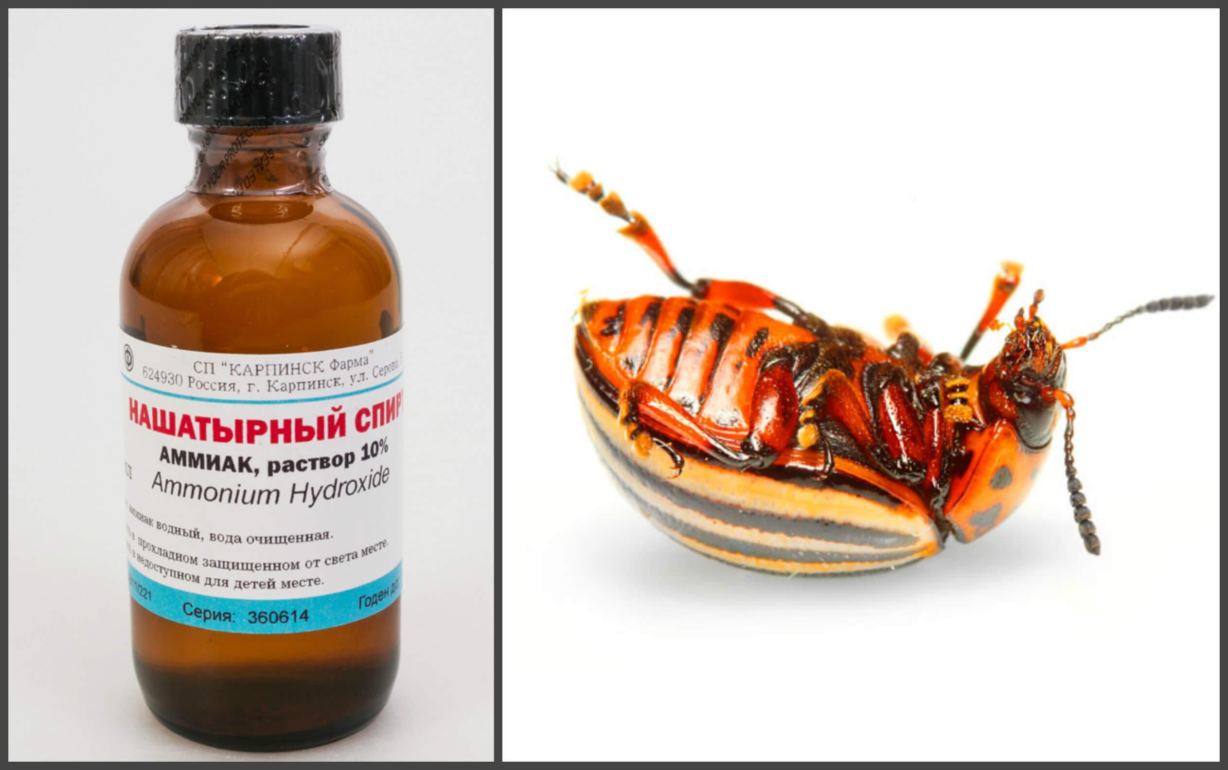 Чем можно отпугнуть тараканов