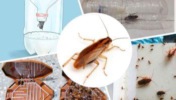 Лучшие ловушки от тараканов: из магазина и самодельные