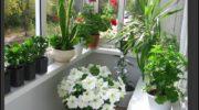 Как вырастить мини-сад на балконе