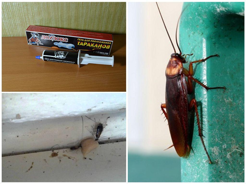 Дохлокс гель от тараканов: инструкция по применению