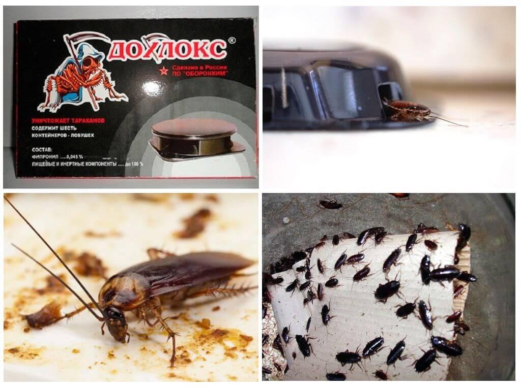 Гель от тараканов Дохлокс – отзывы и описание