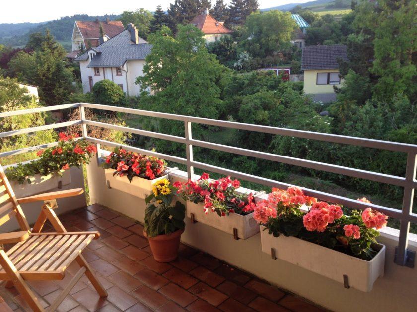 Осенние цветы для балкона