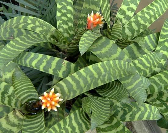 Как спасти залитое растение? Быстрая помощь, если залили цветок.