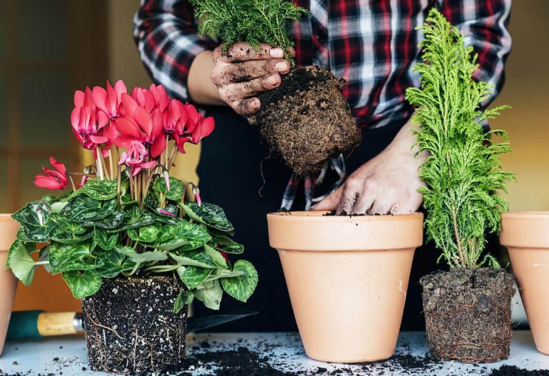 Автоматический полив своими руками цветов