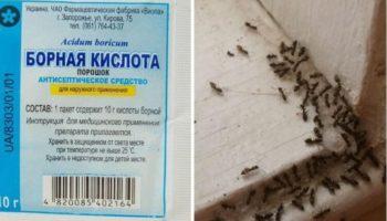 Как вывести муравьев отравой с борной кислотой