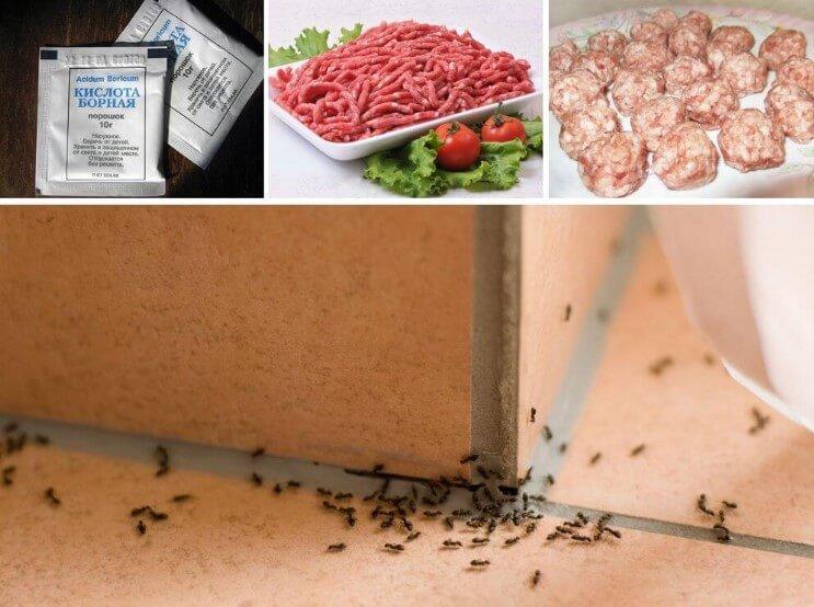 Борная кислота для муравьев в доме