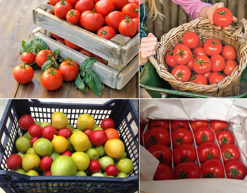 Как хранить томаты в домашних условиях
