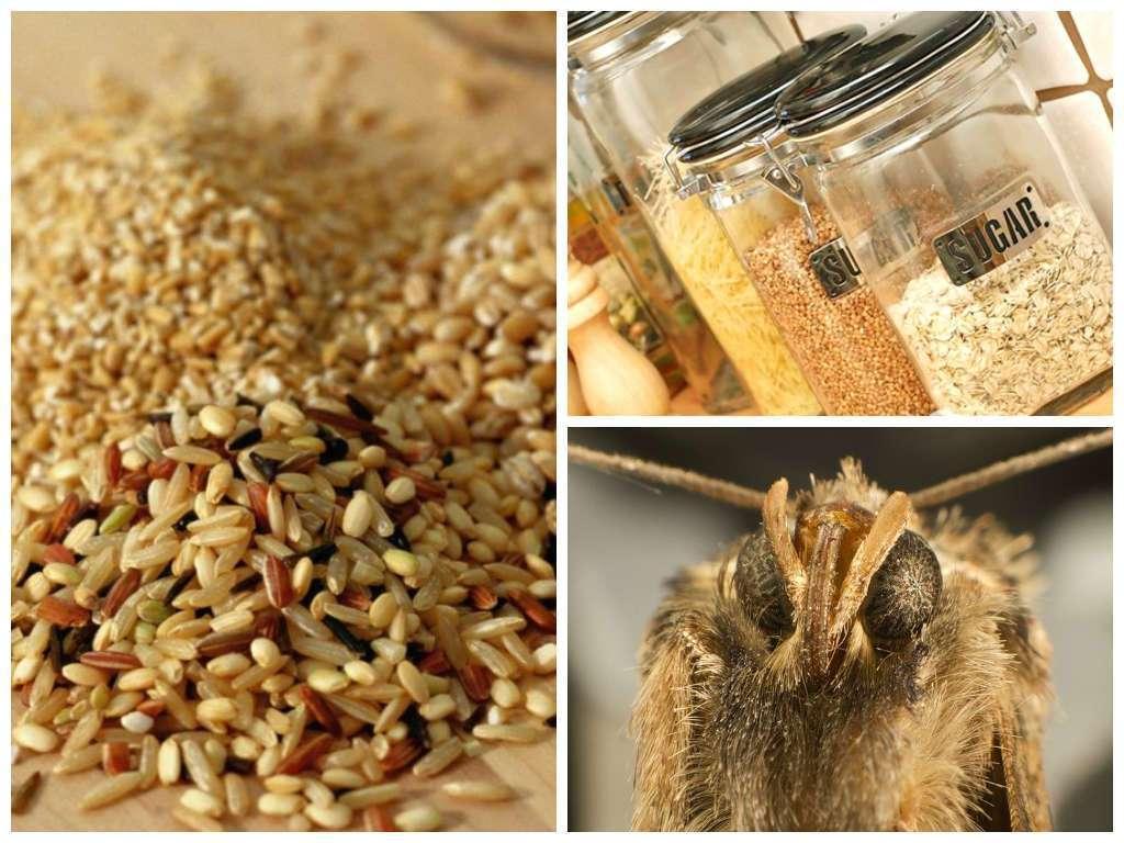 Как вывести пищевую моль на кухне: эффективные средства