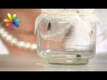 Как избавиться от мух без химических спреев и мухобойки?