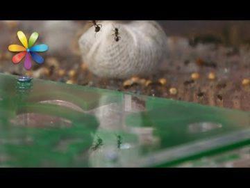 Как уничтожить тлю без химикатов?